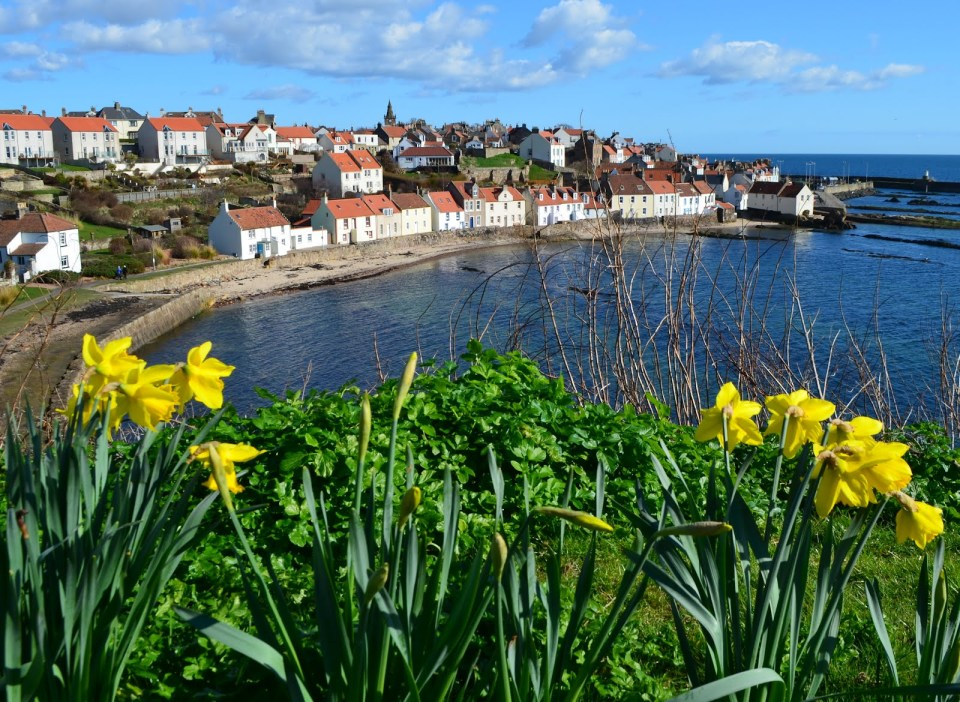Tour+Scotland+Photograph+Daffodils+Pittenweem+East+Neuk+Of+Fife+March+18th+02.jpg (1600×1170)
