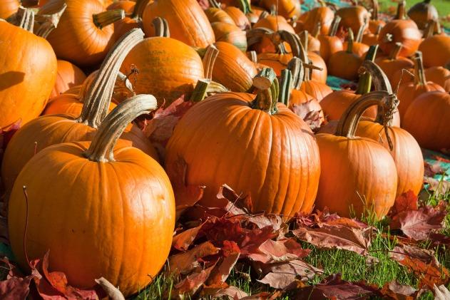 pumpkins_large_fb
